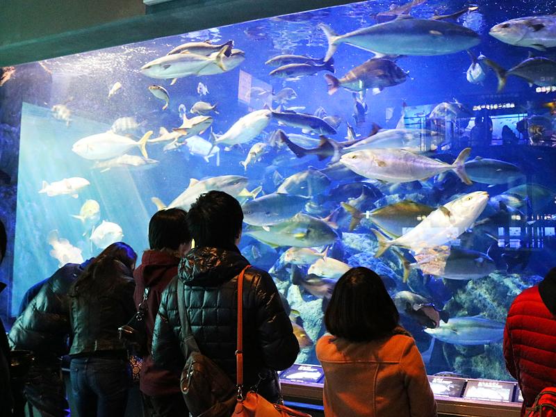 鳥羽水族館観光