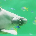 toba_img_dugong_bye
